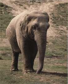 Небольшой доклад про слона 1295