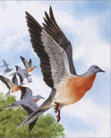 Доклад про странствующего голубя 913